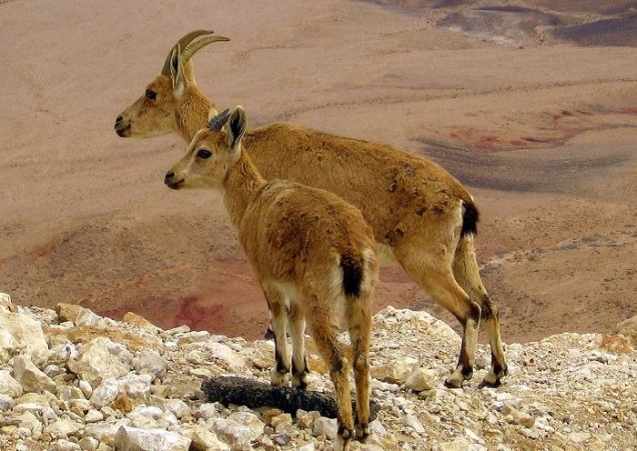 טיול חורפי בישראל
