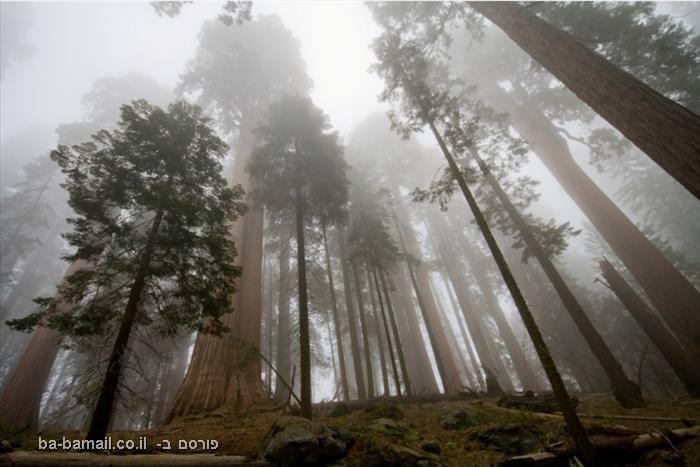 עצי סקוויה, פארק יוסמיטי, קינגס קניון, טבע