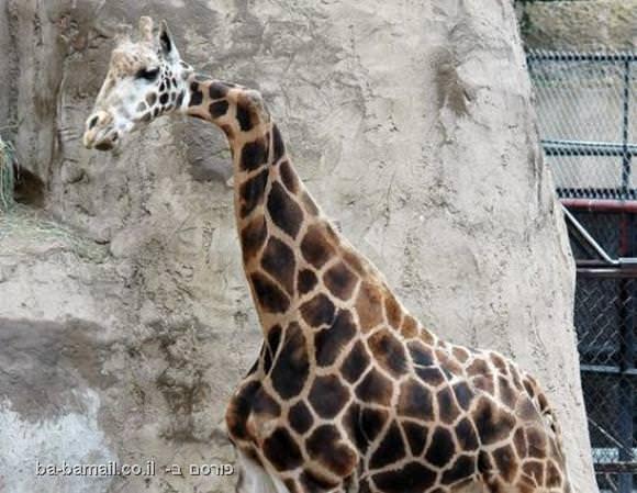 החיות המוזרות ביותר בעולם