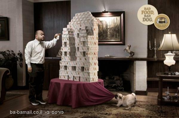כלב, שובב, קלפים