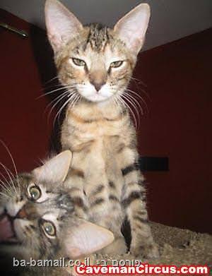 בעלי חיים, תמונה, מצחיק