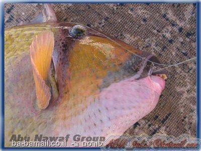 דג, שפתיים, שיניים, טריגר, תמונה