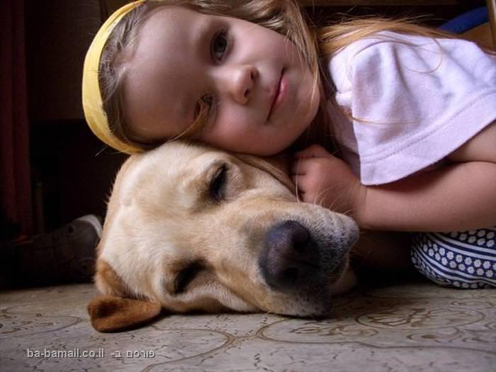 כלבים, חתולים, ילדים, בעלי חיים, תמונות