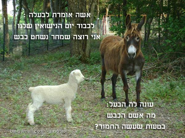 הכבש והחמור, בדיחה מצחיקה, חיי נישואין