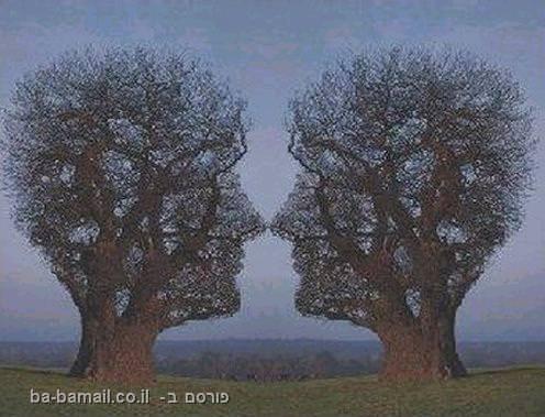 עצים, אסטרולוגיה, אישיות, אופי, מיסטיקה