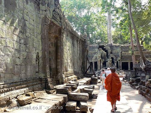 מקדש, ג'ונגל, אנגקור, אנגקור ואט, קמבודיה