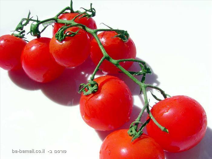 המצאות, המצאות ישראליות, פיתוח ישראלי, עגבניות שרי