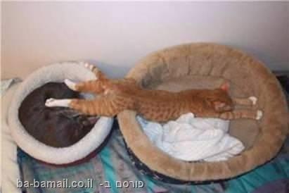 חתולים, כלבים, חמוד, שינה, מתוק