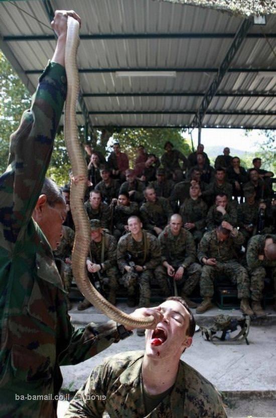 חיל הנחתים, מאכל דוחה, מארינס, תאילנד, חייל אמריקאי, נחש