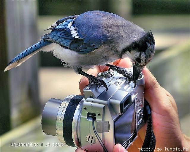 חיות, טבע, מצחיק, ציפור, מצלמה