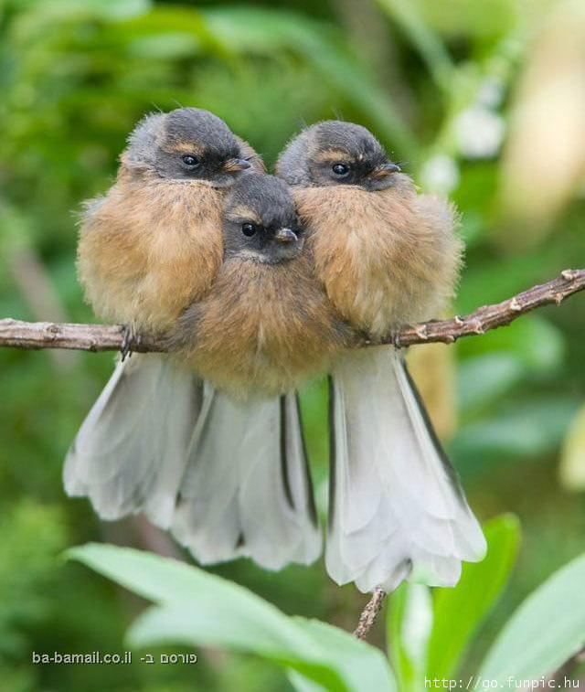חיות, טבע, מצחיק, ציפורים