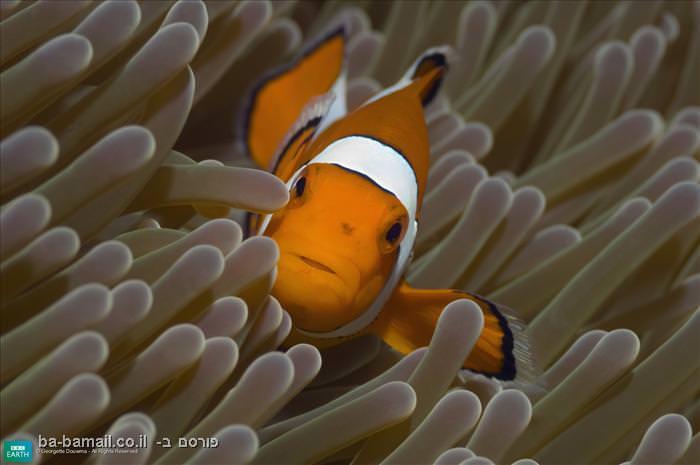חיות, חיות צבעוניות, צבע, חיות יפות, מדהים, דג, דגים, דג ליצן