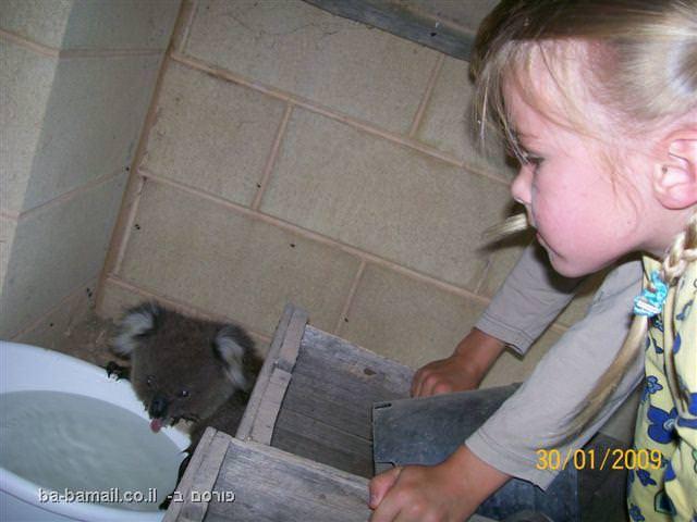 דובי קואלה, אוסטרליה, מתוקים