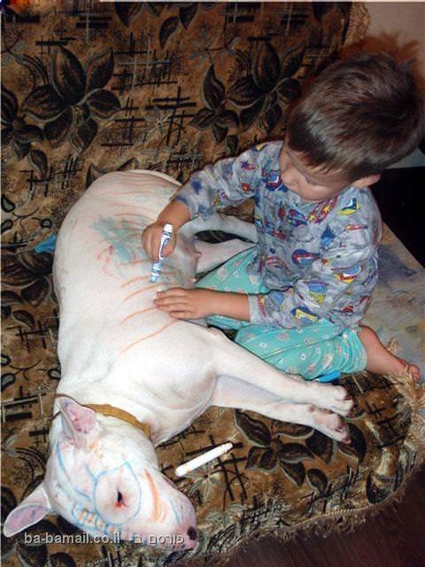 כלב, ילד, ציור