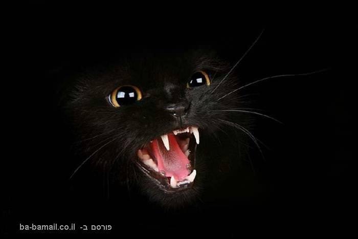 חיות, תמונות, מדהים, דרמטי, חיות, בעלי חיים, טבע, חתול, חתולה, חתולים