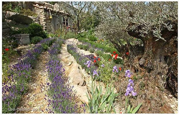 פרחים, תערוכת הפרחים של צ'לסי, סידור פרחים, גננות, פרובנס