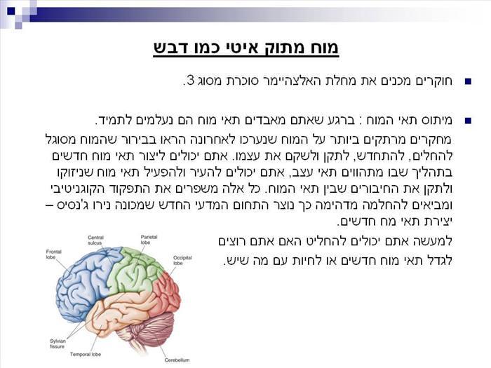 כיצד להגיע לגיל 100 בבריאות טובה ומוח צלול