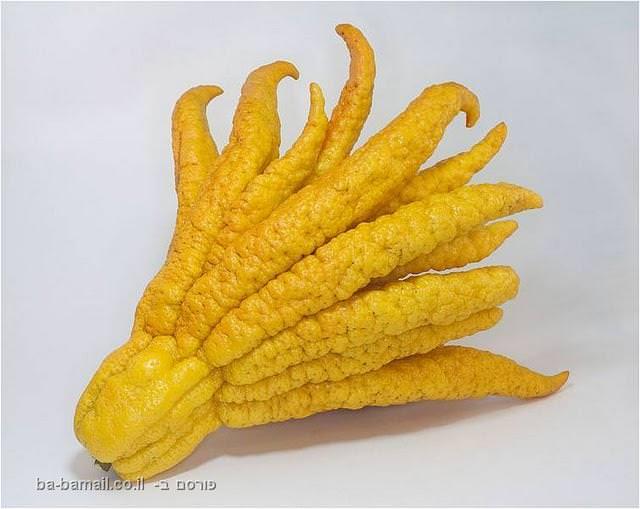 ידו של בודהה