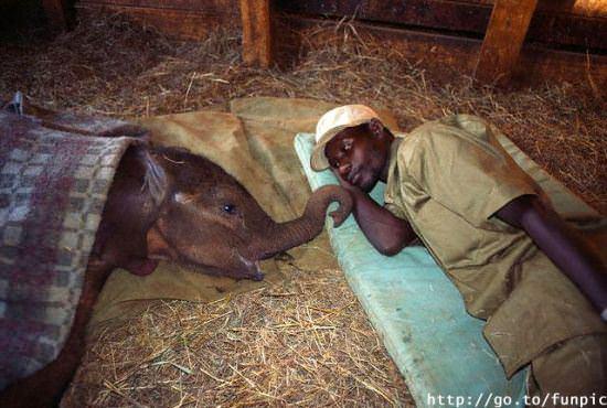 תמונות מיוחדות של בעלי חיים