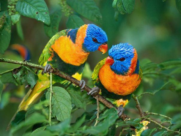 תמונות נפלאות של ציפורים