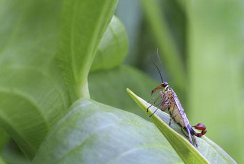תחרות צילום הטבע הפראי 2011
