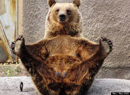 חיות מתרגלות יוגה