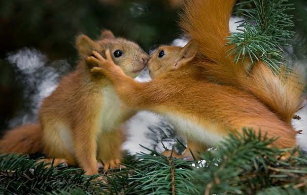 הצד הפראי של הטבע - תמונות מדהימות!