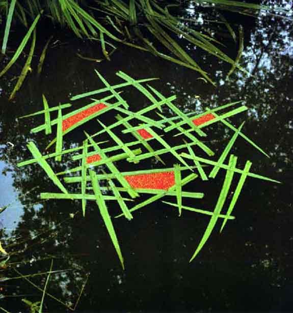 אומנות סביבתית