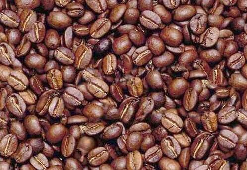 איש חבוי בין פולי קפה