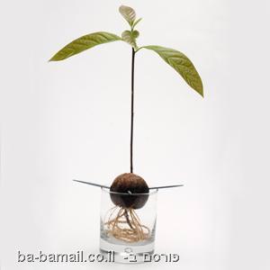 ילדים מגדלים צמחים