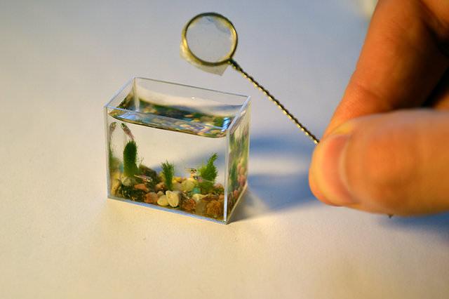 מי נכנס לאקווריום הקטן בעולם?