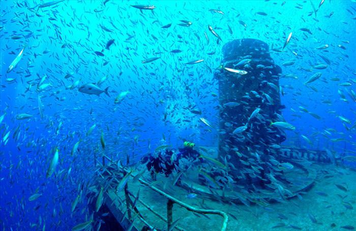 זיהום האוקיינוס הפך לשונית אלמוגים מדהימה