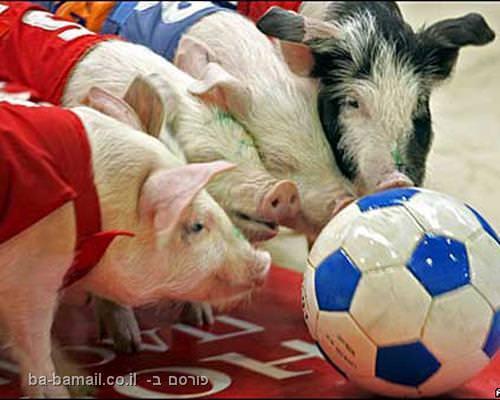ספורט עם בעלי חיים
