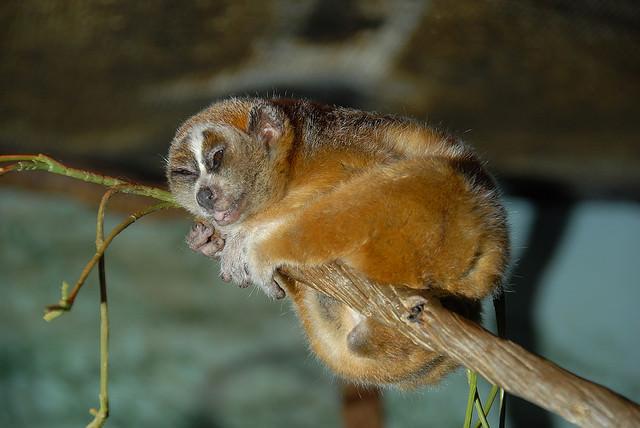טבע סיני - זני חיות מדהימות שמתגוררות בסין! (בעריכה)