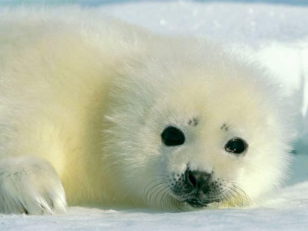 7 זנים של כלבי ים ששווה להכיר! (בעריכה)