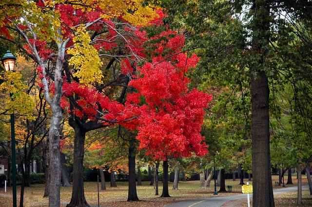 תמונות של עצים בשלל צבעים וגדלים! (בעריכה)
