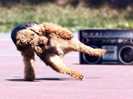 YA MAN! - תמונות של חיות רוקדות!
