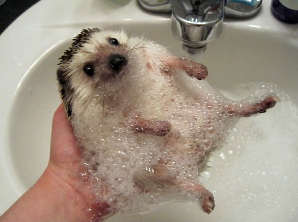 תמונות מקסימות של חיות שיעלו לכם חיוך! (בעריכה)