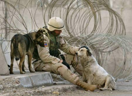 חיילים וחיות מחמד - הלב מתמוסס מאהבה...(בעריכה)