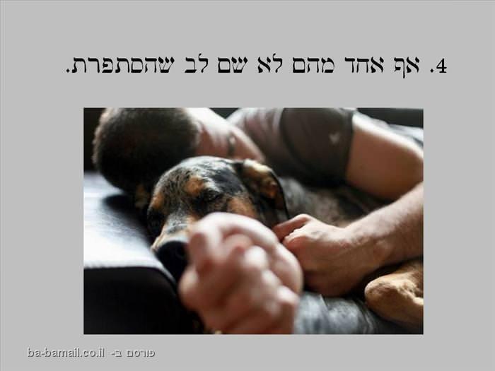 כלבים וגברים