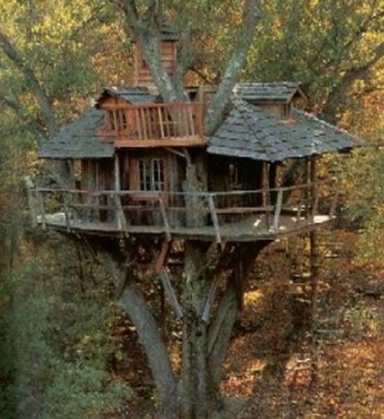 לא רק קופים - גם אתם יכולים לגור על עצים! (בעריכה)