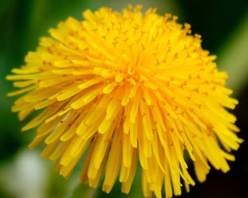 צמחים מרפאים