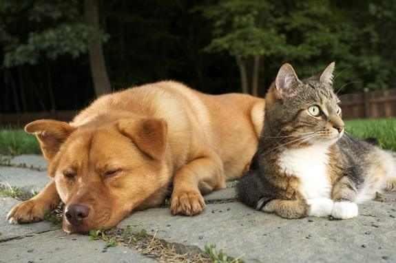 10 עובדות חשובות לאוהבי חתולים