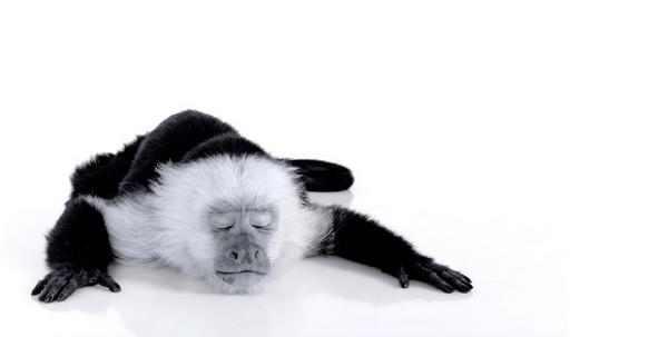 חיות בשחור לבן