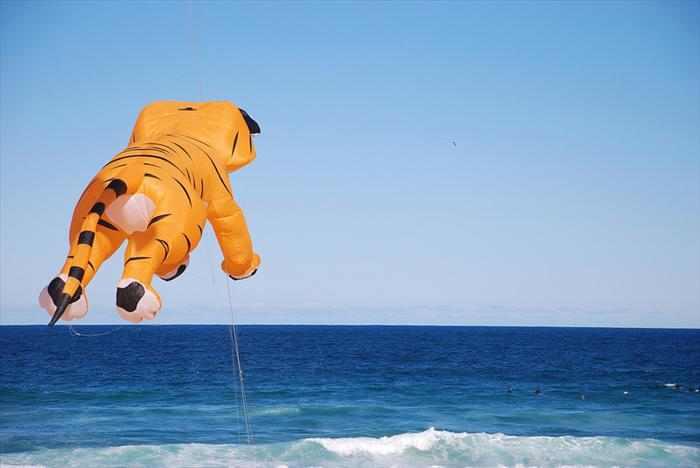 פסטיבל עפיפונים באוסטרליה