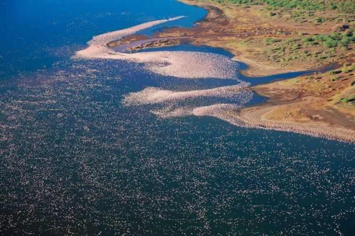 אגם פלמנגו בקניה