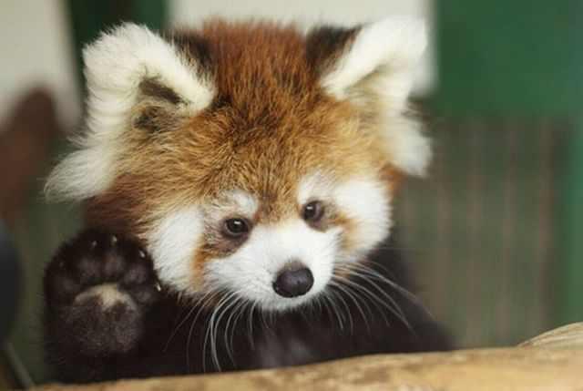 תמונות מצחיקות של בעלי חיים
