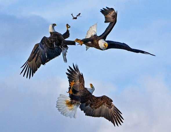תמונות טבע מדהימות!