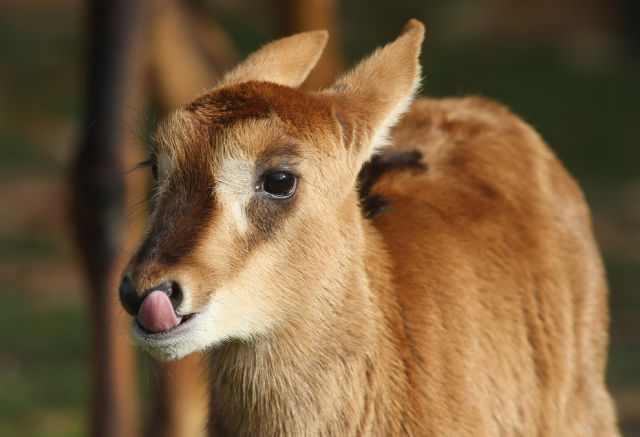 תמונות חמודות של גורים מכל סוגי החיות