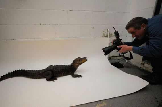 תמונות סטודיו של בעלי חיים